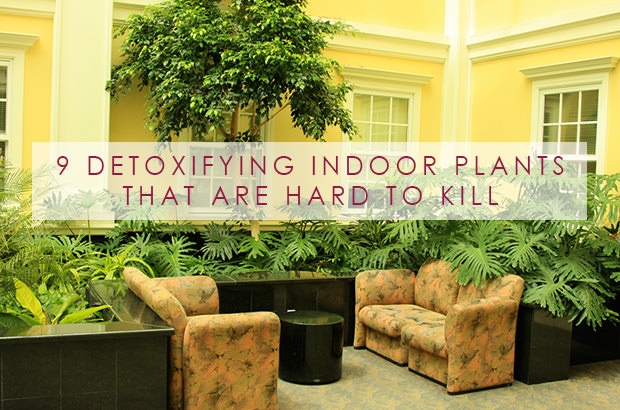 9 Detoxifying Indoor Plants That Are Hard To Kill