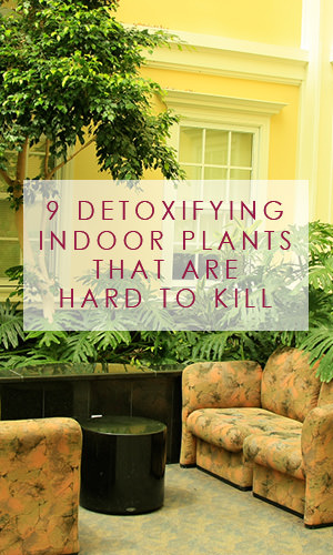 We spend more than 90 percent of our time indoors. Rather disturbingly, indoor air pollutants have been ranked among the top five environmental risks to public health. Here's a list of really robust plants that can help you clean the air in your home.