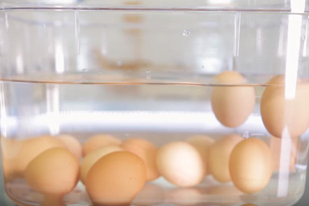 Check if eggs are still (incredibly) edible