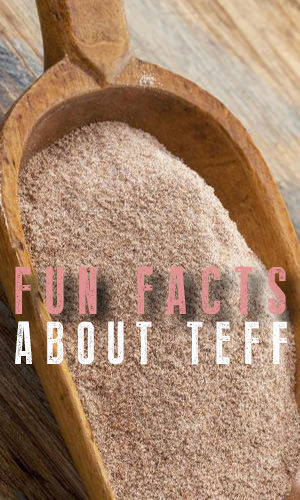 Teff, because of its amazing nutritional profile, has taken the health world by storm. But there's a lot more to this supergrain that will intrigue you. Here are some fun facts we thought you'd find interesting.