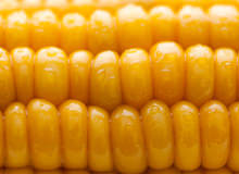 Interesting Corn Facts You Did Not Know