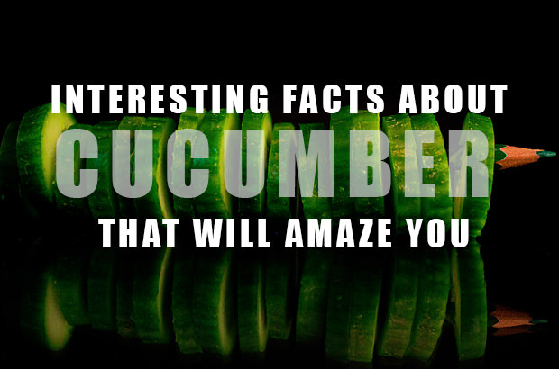 Interesting Facts About Cucumbers That Will Amaze You