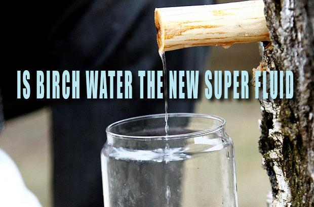 Is Birch Water The New Super Fluid