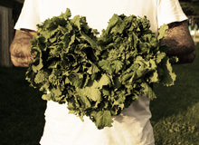 Why Kale Is Good For Your Heart