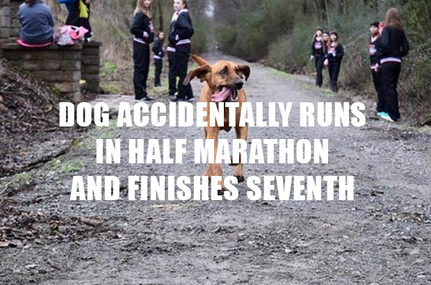 Dog Accidentally Runs In Half Marathon And Finishes Seventh