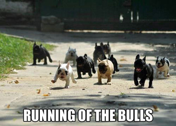 Runner Humor #20: Dog humor: Running of the Bulls.